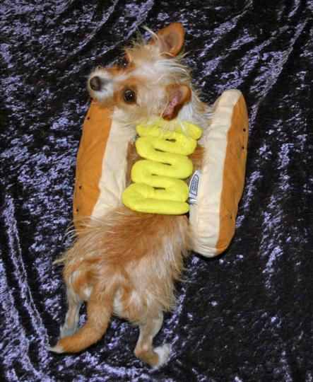 halloween-09-hot-dog-2-tessa-custom.jpg