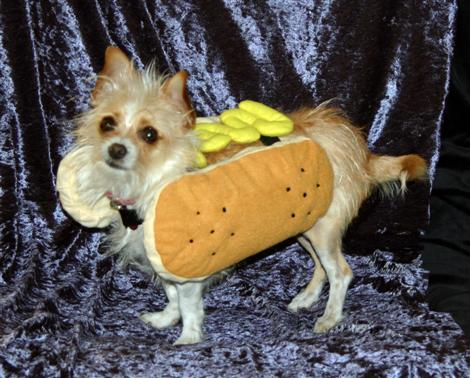 halloween-09-hot-dog-tessa-custom.jpg