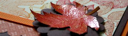 oct-09-leaf-close-up-custom.jpg