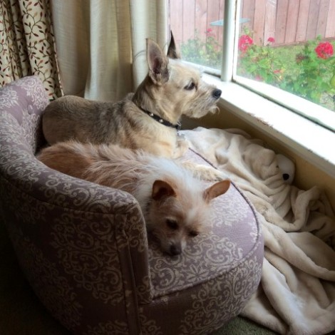 0jan 2015 dogs in window 1 (Small)